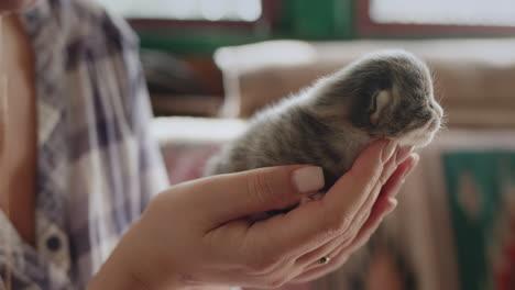 Woman-holds-a-newborn-blind-kitten