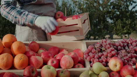 The-farmer-puts-ripe-apples-on-the-counter