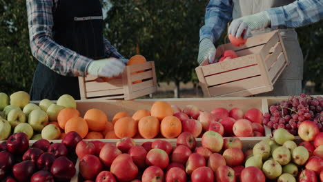 Merchants-lay-out-fruit-on-the-window-of-the-farmers-fair