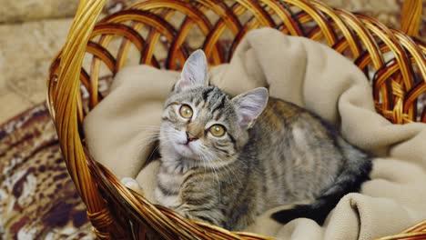 Striped-kitten-sitting-in-a-basket