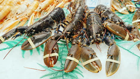 Large-lobsters-in-the-fish-market-lie-on-ice-cubes
