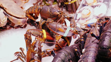 Large-lobsters-on-the-fish-market-lie-on-ice-cubes