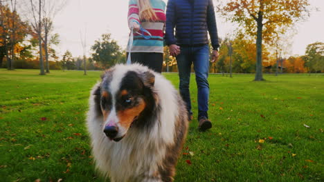 Young-Couple-Holding-Hands-Walking-With-A-Dog-In-The-Park
