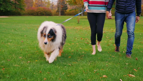 Young-Couple-Holding-Hands-Walking-With-A-Dog-In-The-Park-1