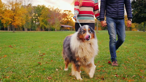 Young-Couple-Holding-Hands-Walking-With-A-Dog-In-The-Park-2
