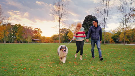 Young-Couple-Holding-Hands-Walking-With-A-Dog-In-The-Park-4