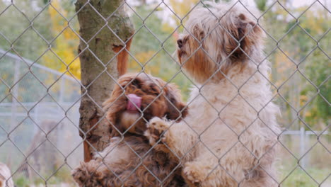 A-Lot-Of-Dogs-Behind-The-Net-Of-The-Aviary-Waiting-For-The-Owner