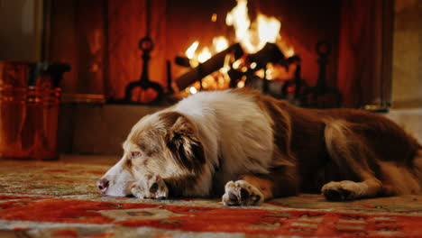 Dog-Lying-In-A-Cozy-House-Near-The-Fireplace