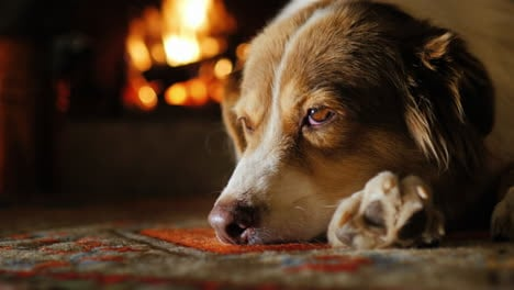 Dog-Lying-In-A-Cozy-House-Near-The-Fireplace-1