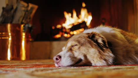 Dog-Lying-In-A-Cozy-House-Near-The-Fireplace-5