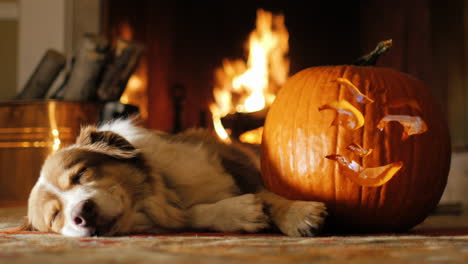 Dog-Napping-Near-A-Carved-Pumpkin-1