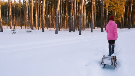 Young-Woman-In-Pink-Down-Jacket-Carries-A-Empty-Sled-In-The-Winter-Woods