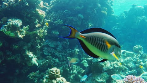 Exotic-Fish-In-The-Surf-Zone