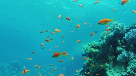 Wild-Underwater-World-With-Corals-And-Colorful-Exotic-Fish