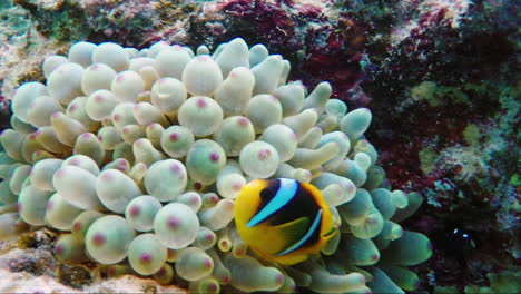 Exotic-Fish-In-The-Surf-Zone-1