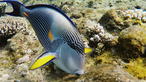 Exotic-Fish-In-The-Surf-Zone-2