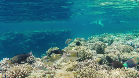 Wild-Underwater-World-With-Corals-And-Colorful-Exotic-Fish-2