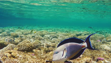 Exotic-Fish-In-The-Surf-Zone-4