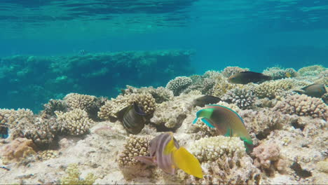 Wild-Underwater-World-With-Corals-And-Colorful-Exotic-Fish-3