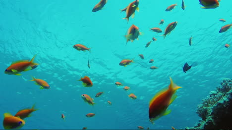 Wild-Underwater-World-With-Corals-And-Colorful-Exotic-Fish-4
