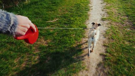 A-Woman-Digs-Up-A-Dog---A-Favorite-Pug
