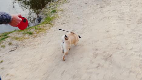 A-Woman-Digs-Up-A-Dog---A-Favorite-Pug-2