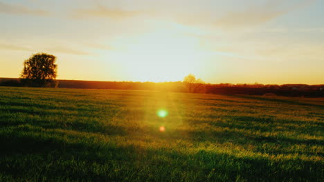 Beautiful-Scenery---Green-Meadow-At-Sunset-With-A-Lonely-Tree-On-The-Horizon-2