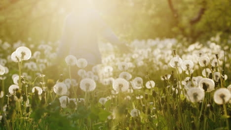 A-Carefree-Girl-Runs-Across-The-Field-Of-Dandelions-At-Sunset