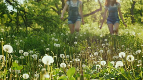 Two-Carefree-Girls-Are-Running-Around-In-The-Field-Of-Dandelions