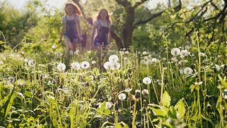 Two-Carefree-Girls-Are-Running-Around-In-The-Field-Of-Dandelions-2